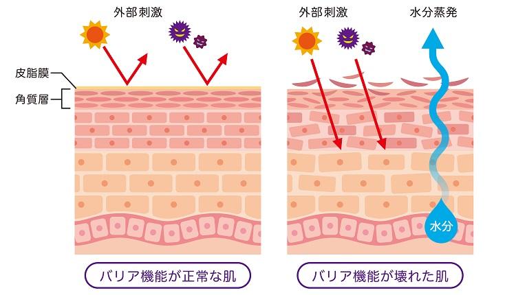 バリア機能の解説