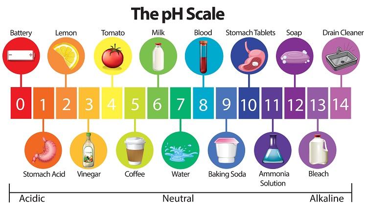 phは酸性からアルカリ性の度合を数字であらわす