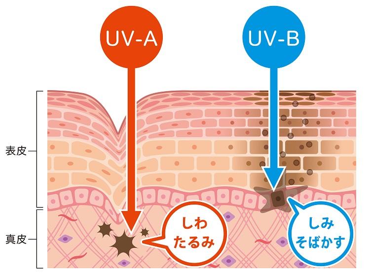 紫外線の種類でダメ―jいを受ける場所が違う