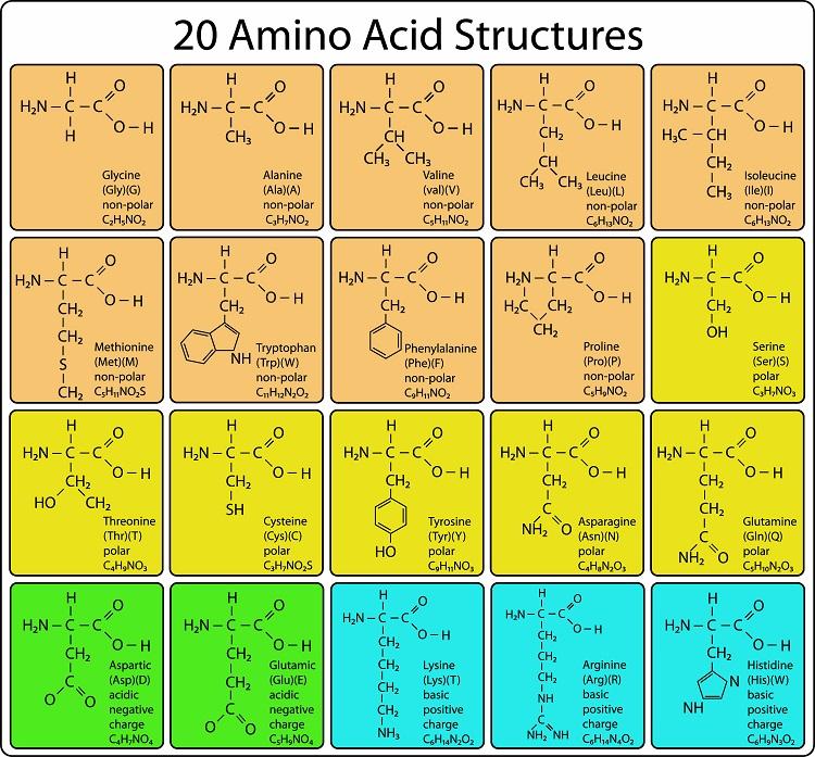 たんぱく質を構成するアミノ酸の種類