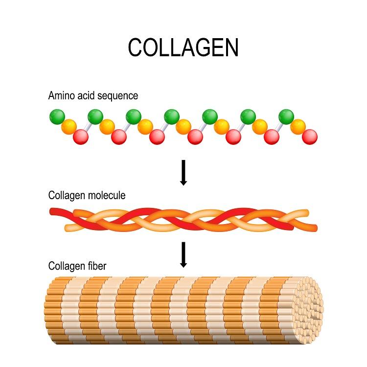 コラーゲンとは?アミノ酸が組み合わされたたんぱく質のひとつ