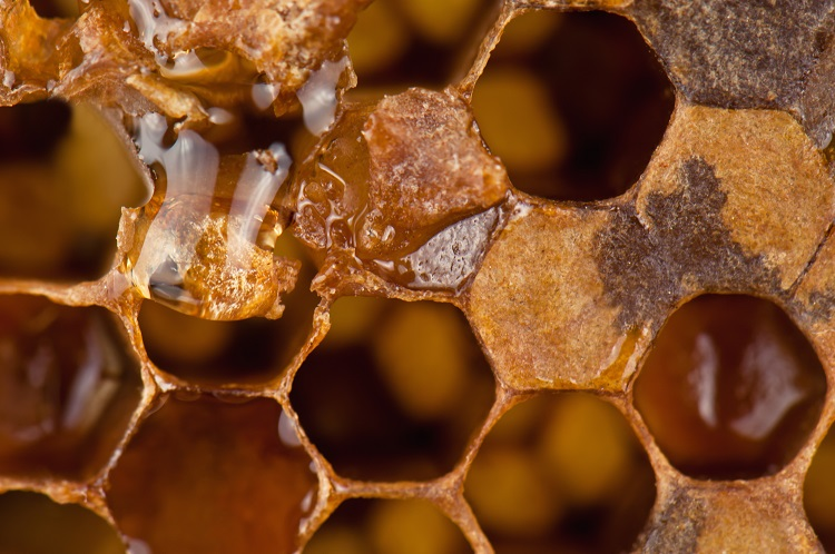ミツバチの巣の入り口に塗られるプロポリス