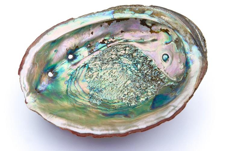 あわび貝殻エキスパウダー