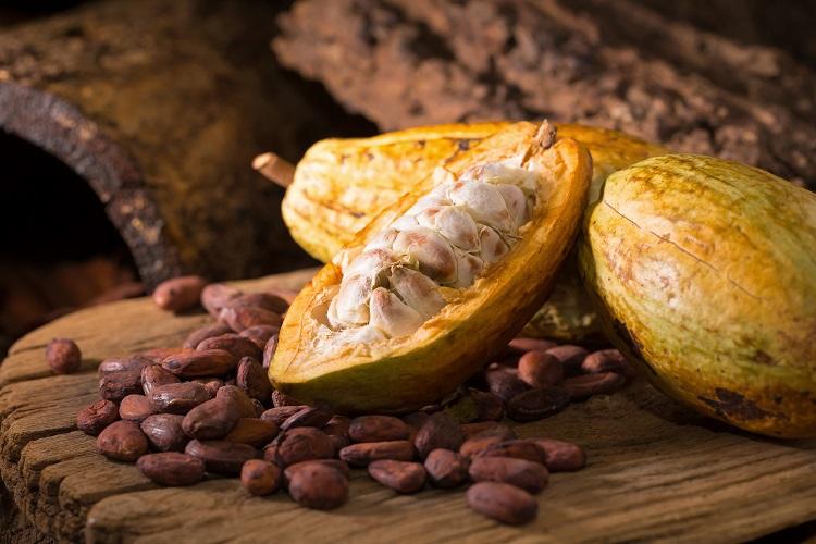 カカオ豆がとれるカカオフルーツ